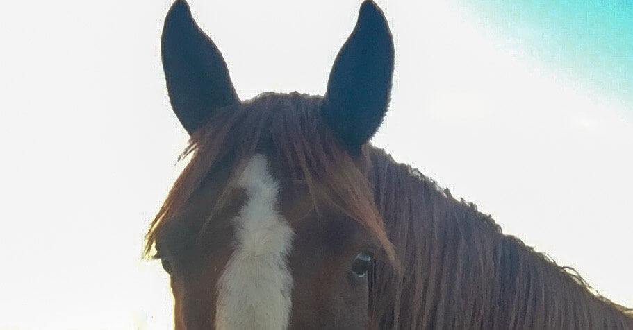 Magnesium til heste
